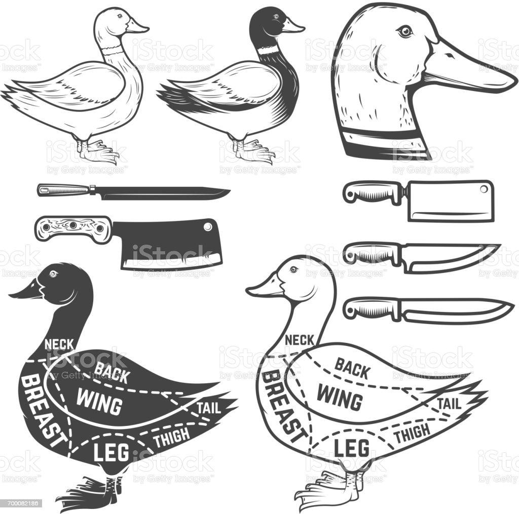duck wing diagram 120v meter wiring butcher design element for poster menu vector illustration royalty free