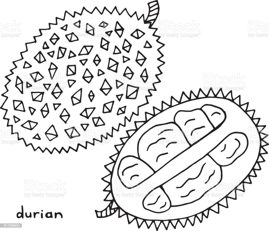 Durian Coloring Page Graphic Vector Black And White Art