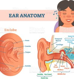 ear anatomy medical vector illustration with outer middle and inner ear cross section diagrams  [ 1024 x 812 Pixel ]
