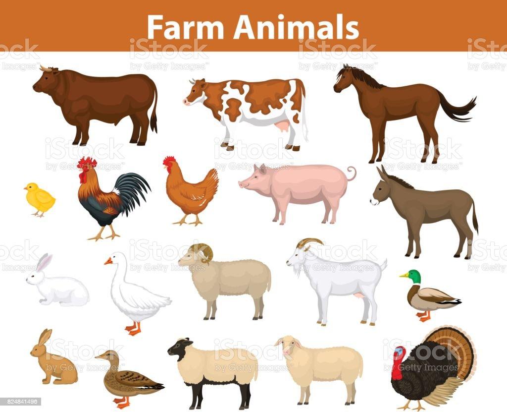 diagram of farm animals ezgo txt pds ilustración de la granja colección animales con vaca