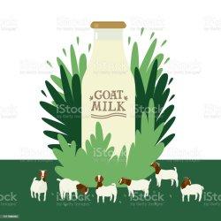 milk goat vector goats boer bottle grazing countryside farming clipart floral today flat meadow cartoon illustrations clip farm farmland agricultural