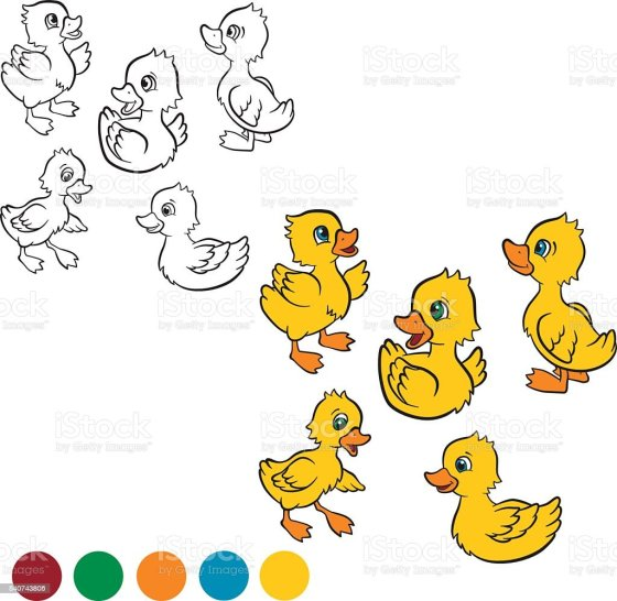 baby duck illustrations royalty-free