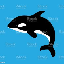 2 030 Killer Whale Illustrations Royalty Free Vector Graphics & Clip Art iStock