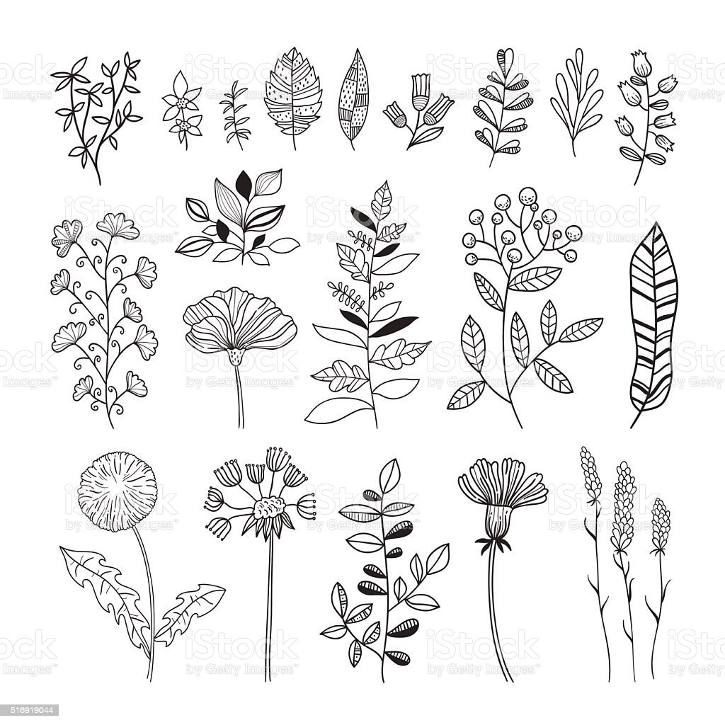 Floral Botanical Vector Set Hand Drawn Flowers And Plants