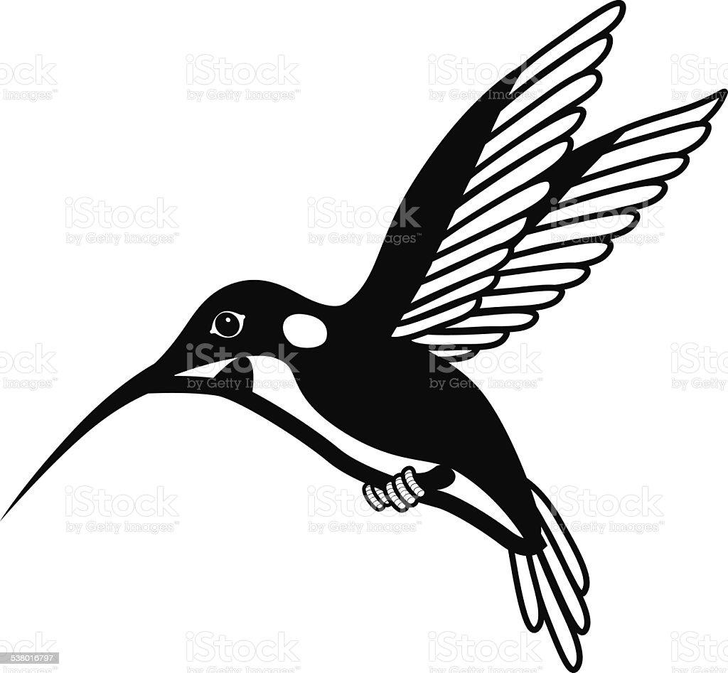 black and white hummingbird