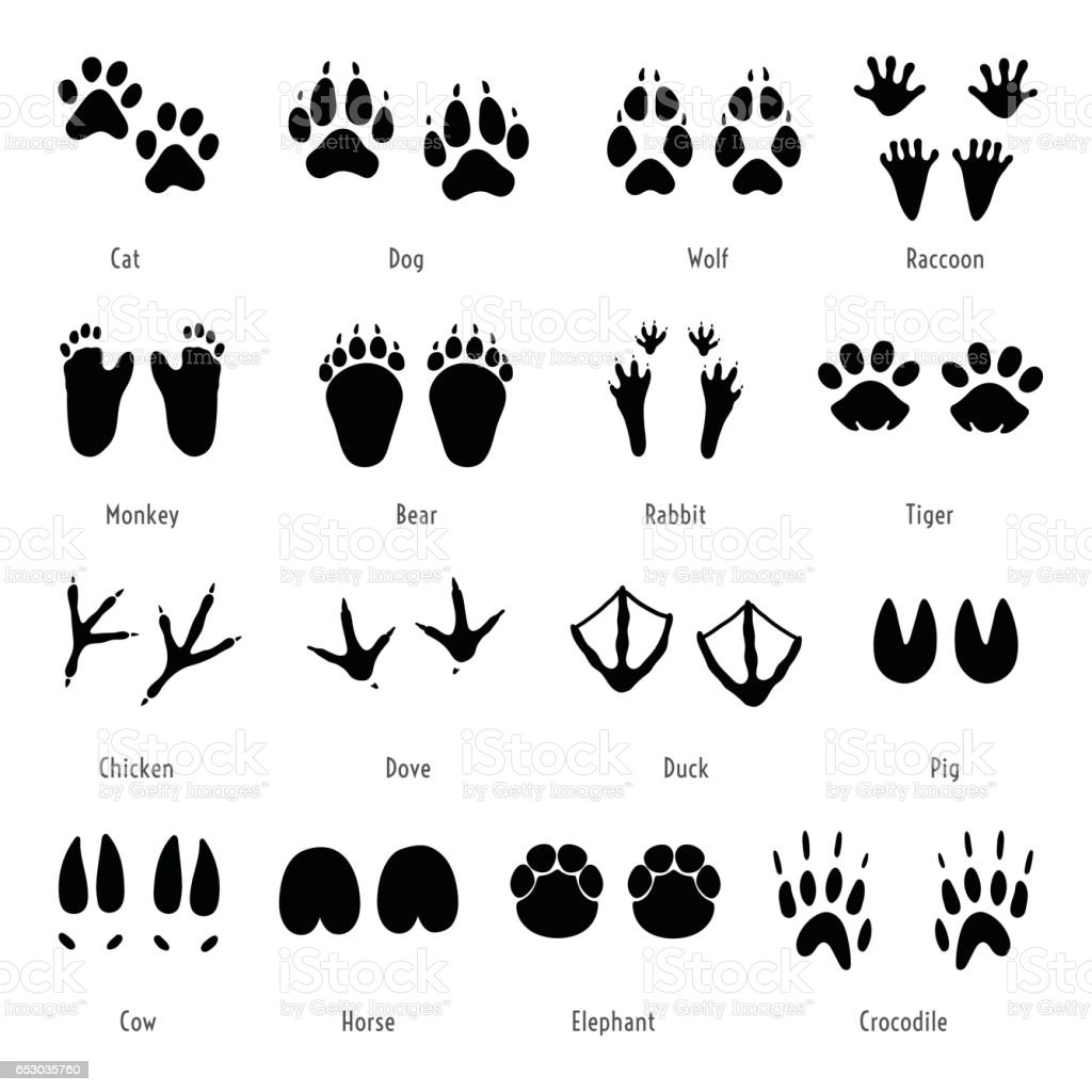 Foot Trail Vector Animal Footprint Set Silhouettes Of
