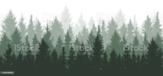 Forest Background Nature Landscape Evergreen Coniferous Trees Pine Spruce Christmas Tree Silhouette Vector Stock Illustration Download Image Now iStock