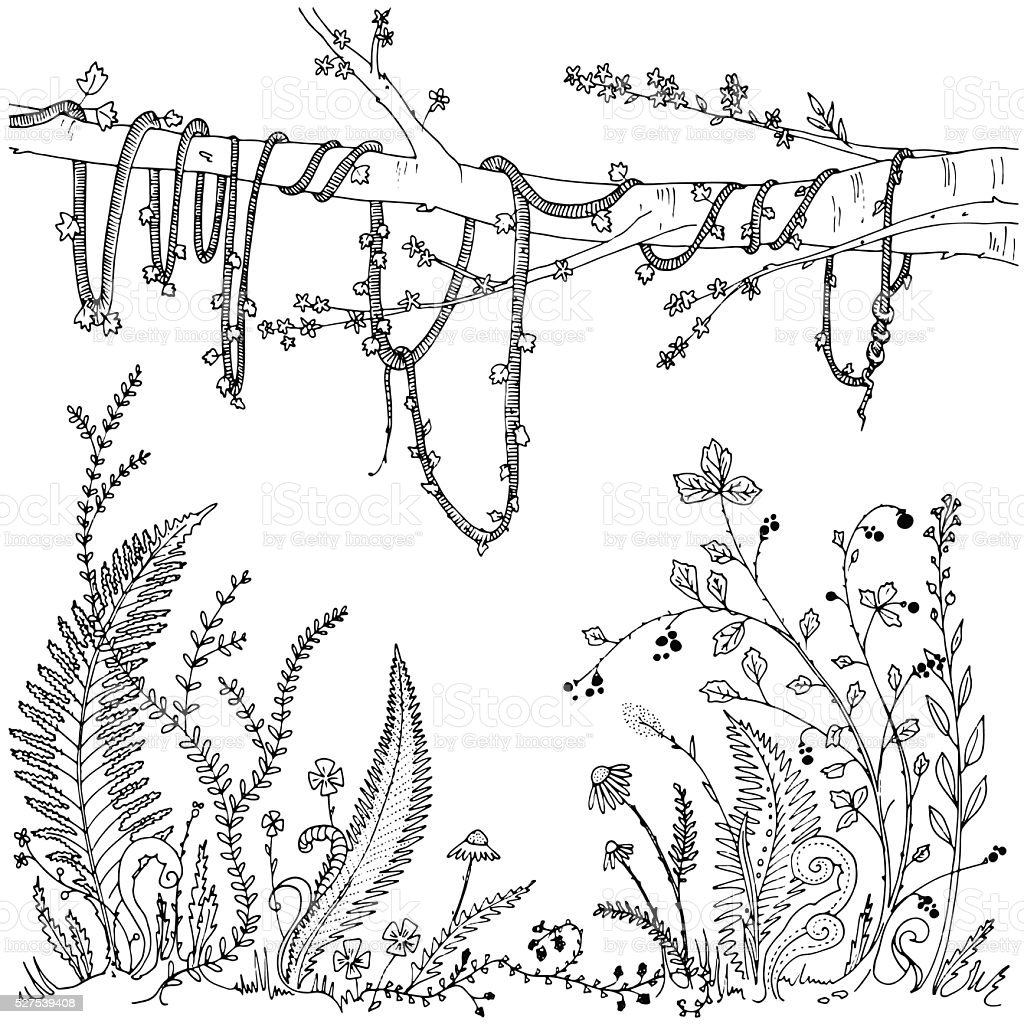 Forest Undergrowth Hand Drawn Coloring Page Stock Vector
