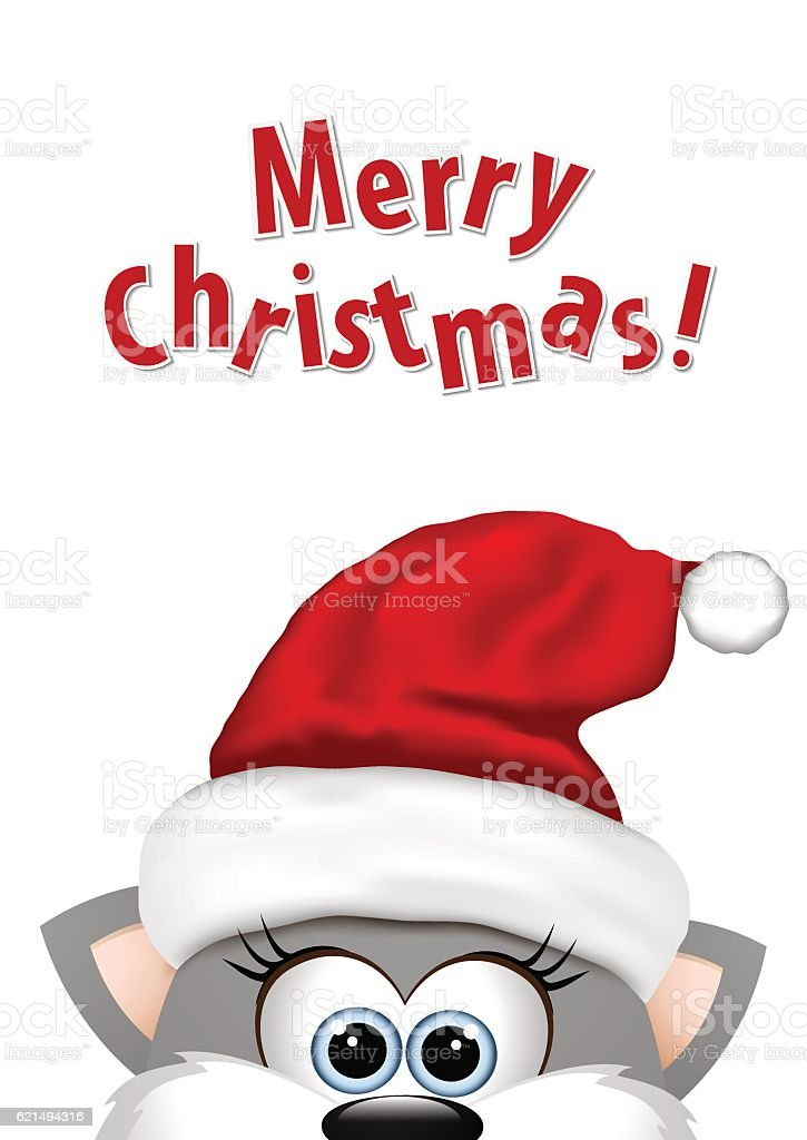 Christmas Cat Background : christmas, background, Funny, Christmas, White, Background, Kitten, Santa, Stock, Illustration, Download, Image, IStock