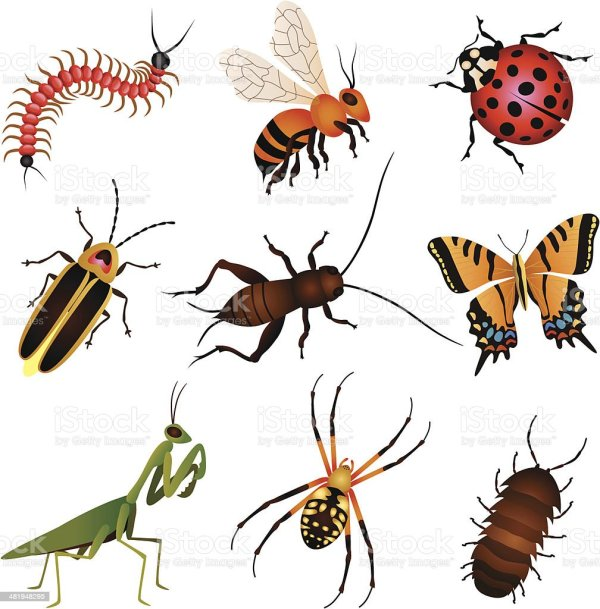 garden insects and creatures stock