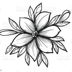 Owl Butterfly Diagram 1992 Toyota Pickup Ignition Wiring Zeichnung Lilie Branch Mit Blätter Und Knospen Der Blumen