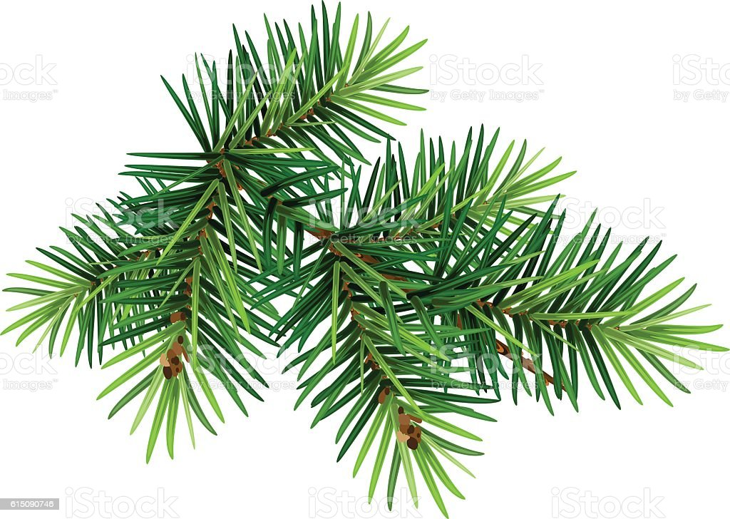 Green Christmas Pine Tree Branch Stock Vector Art Amp More