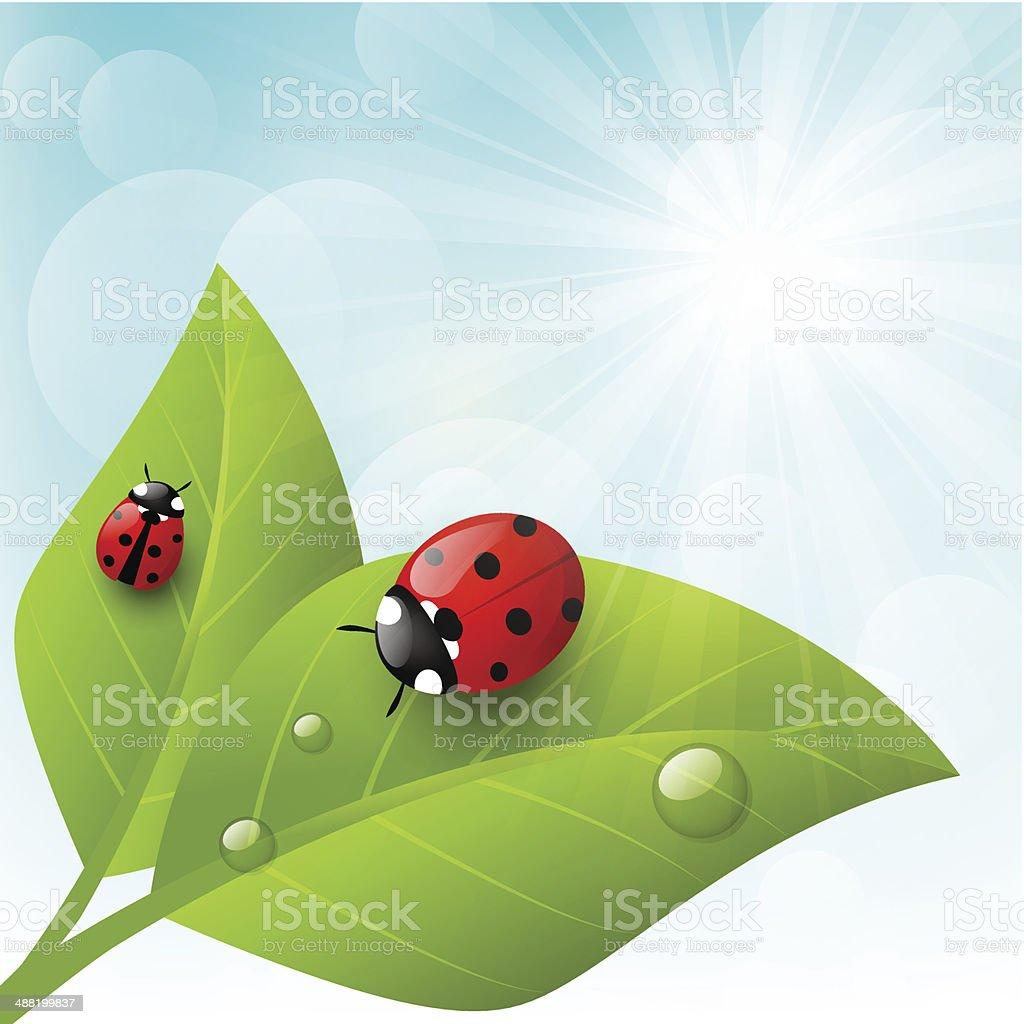 royalty free ladybug clip art