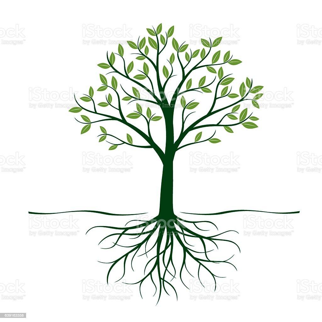 best tree roots illustrations