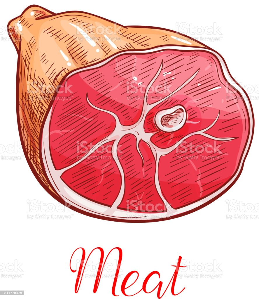 hight resolution of ham meat isolated sketch with smoked pork leg illustration