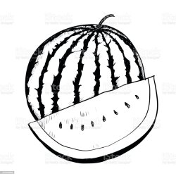 watermelon drawing vector drawn hand illustration coloring section illlustration technique thailand cross