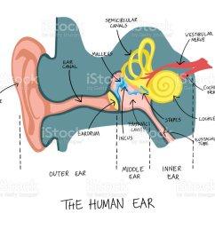 hand drawn illustration of human ear anatomy illustration  [ 1024 x 872 Pixel ]