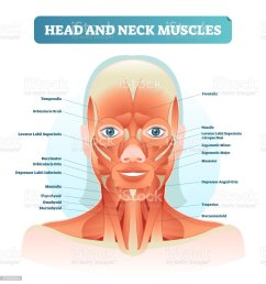 head and neck muscles labeled anatomical diagram facial vector illustration with female face health care educational information poster illustration  [ 968 x 1024 Pixel ]