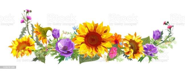border flower horizontal sunflowers gerbera watercolor daisy flowers sunflower vector digital garden draw panoramic thistles anemones autumn painting autumns twigs