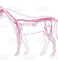 horse diagram royalty free horse diagram stock vector art amp more images of anatomy [ 1024 x 790 Pixel ]