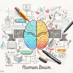 Brain Model Diagram Vdo Electric Oil Pressure Gauge Wiring Human Doodles Icons Style Stock Vector Art