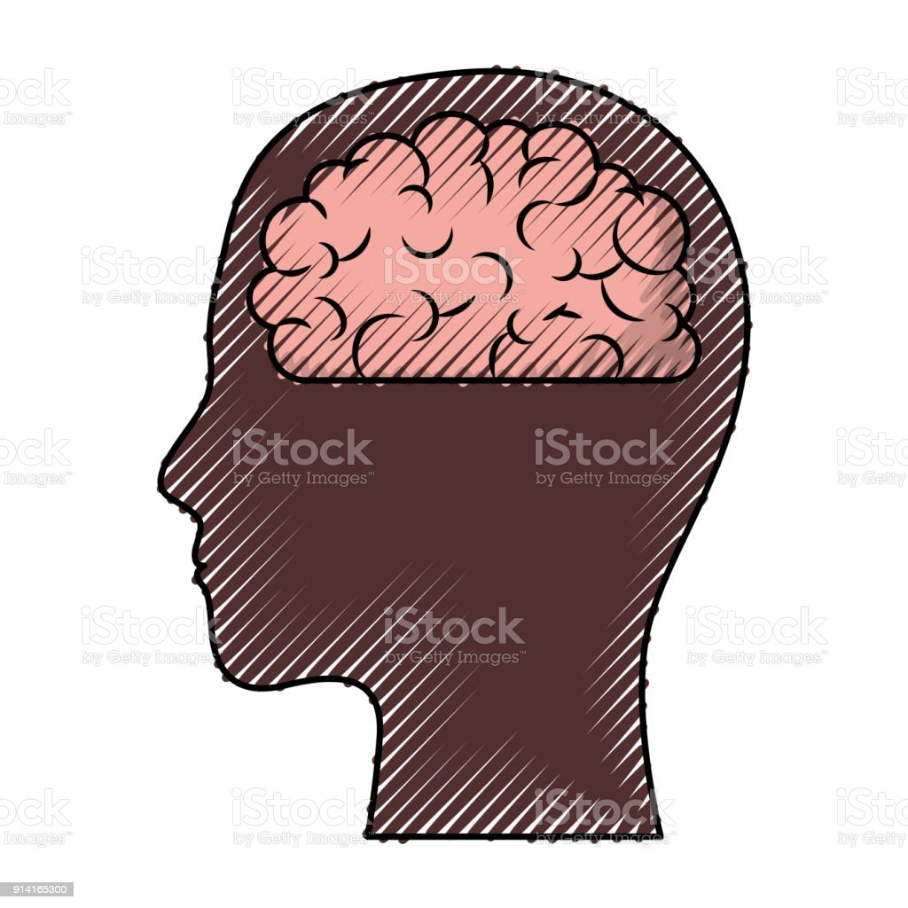 hight resolution of human face brown silhouette with brain inside in colored crayon silhouette royalty free human face