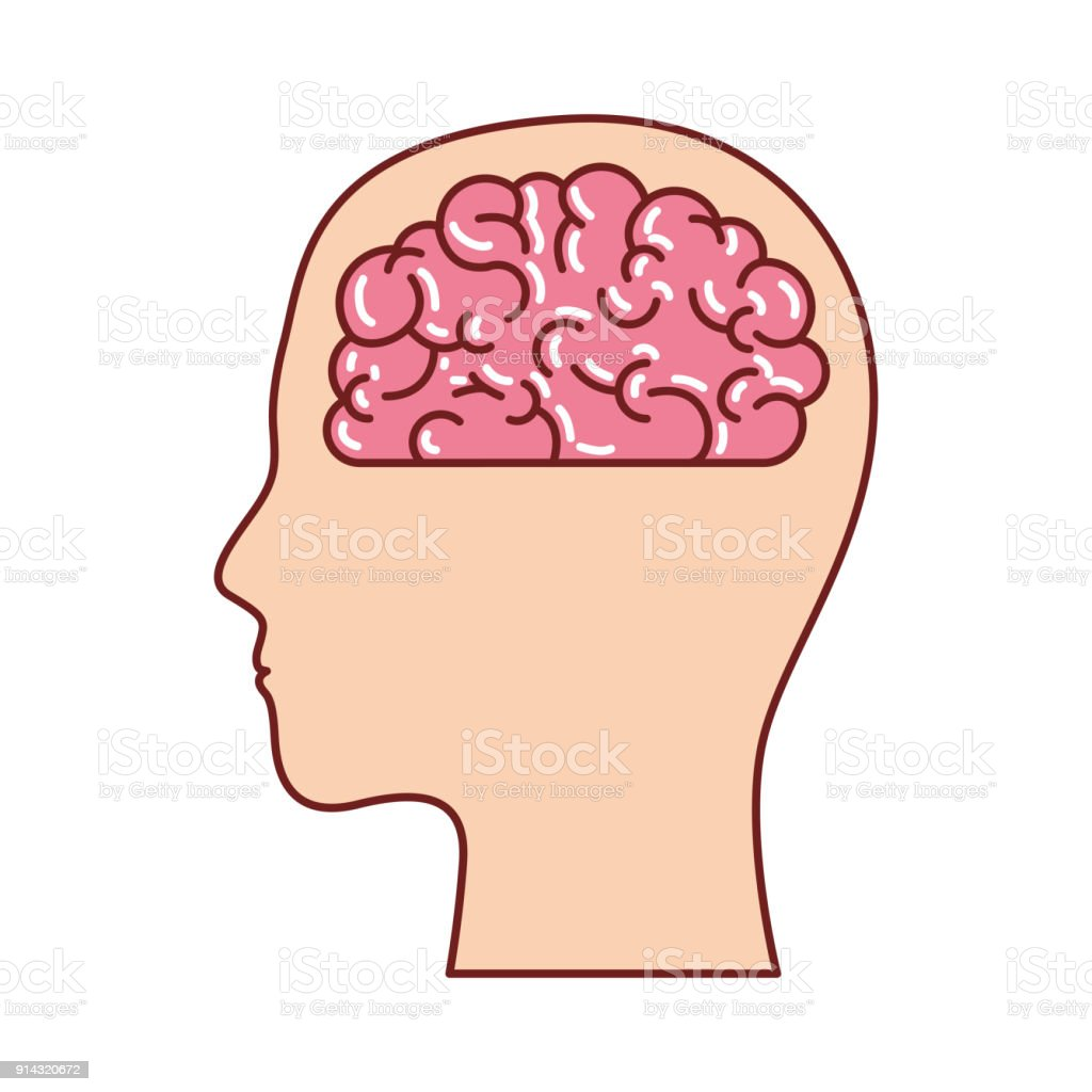 hight resolution of human face silhouette with brain inside in colorful silhouette with brown contour royalty free stock