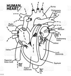 human heart diagram anatomy tattoo royalty free human heart diagram anatomy tattoo stock vector art [ 1024 x 1024 Pixel ]