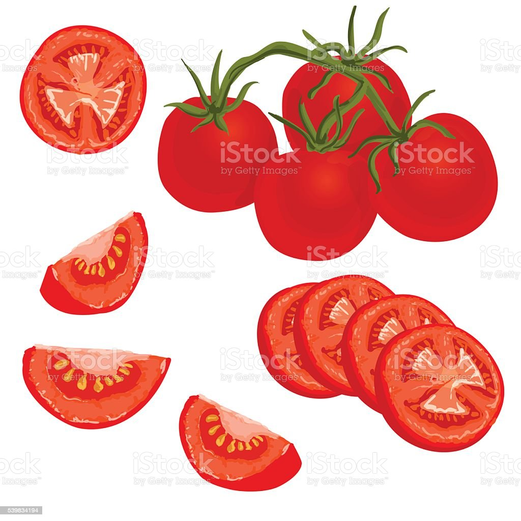 top sliced tomatoes clip art vector