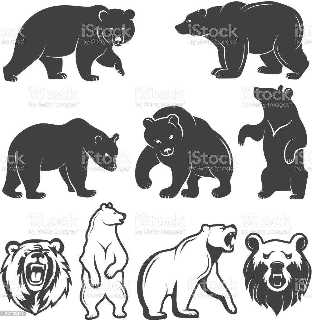 best grizzly bear illustrations