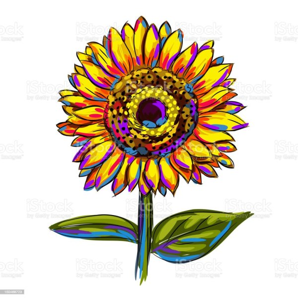 isolated colorful sunflower stock