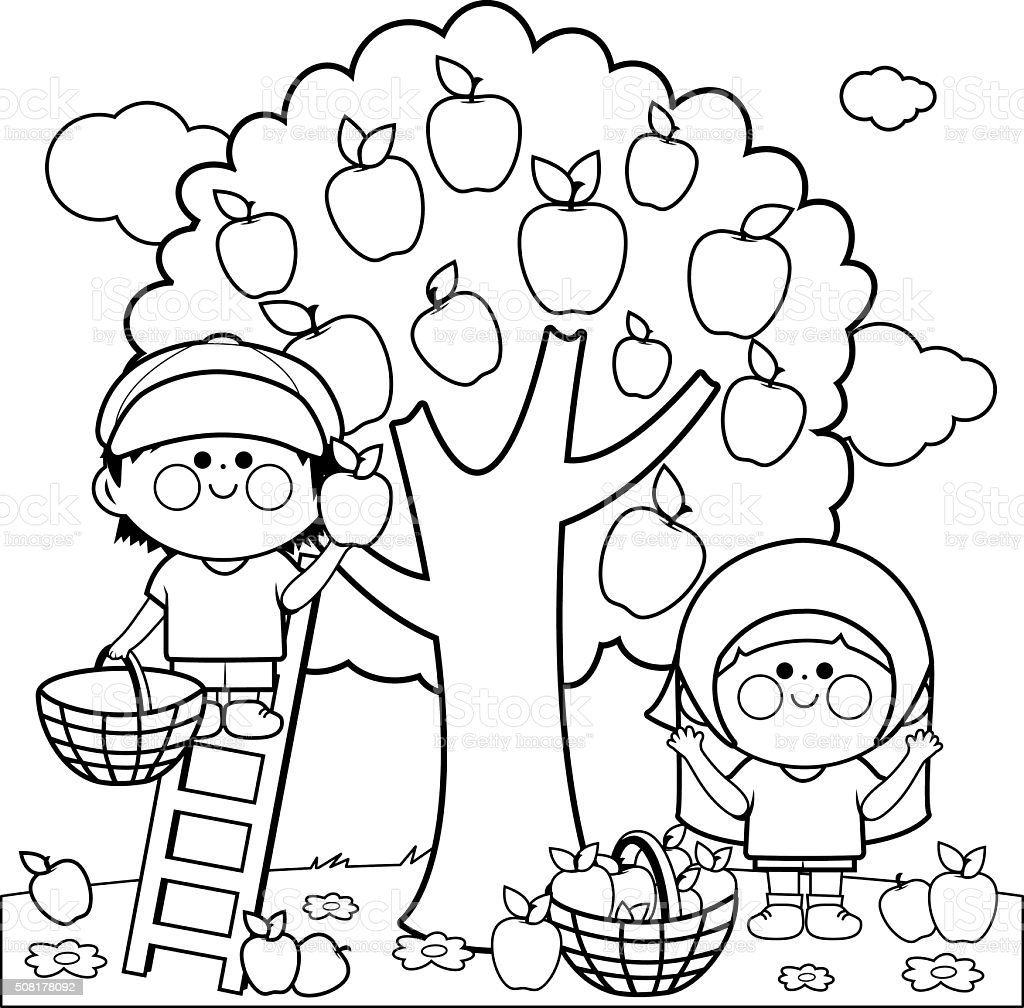 Kids Harvesting Apples Coloring Book Page Stock