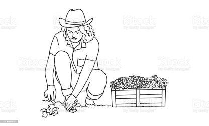 6 187 Woman Gardening Illustrations Royalty Free Vector Graphics & Clip Art iStock