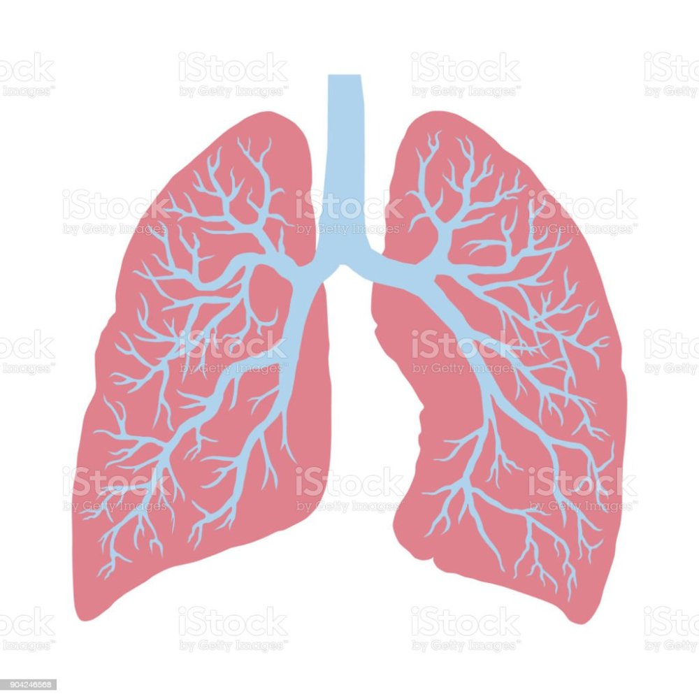 medium resolution of lung cancer diagram in detail illustration royalty free lung cancer diagram in detail illustration stock