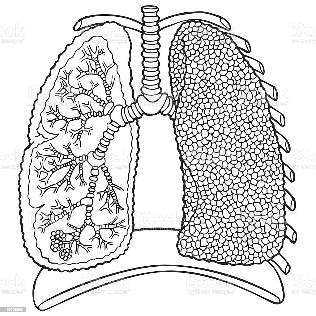 Lungs In Black And White Stock Vector Art & More Images of