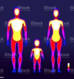 male and female body warmth in infrared spectrum human temperature schematic vector illustration royalty  [ 1024 x 1024 Pixel ]