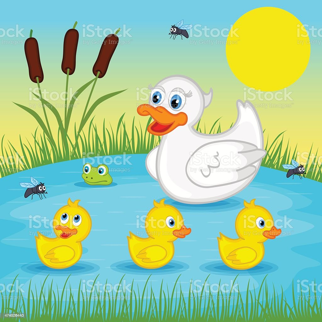 royalty free duck family swimming