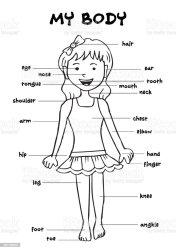body parts clip chart background human cartoon vector showing illustrations feet cute similar