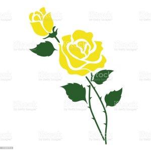rose yellow vector clip flower illustrations leaf garden plant nature botanic floral graphics
