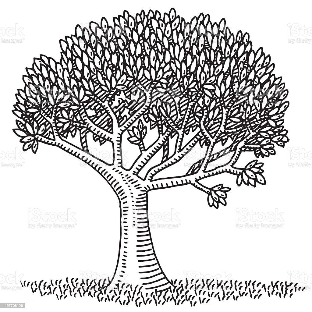 Nature Symbol Deciduous Tree Drawing Stock Vector Art