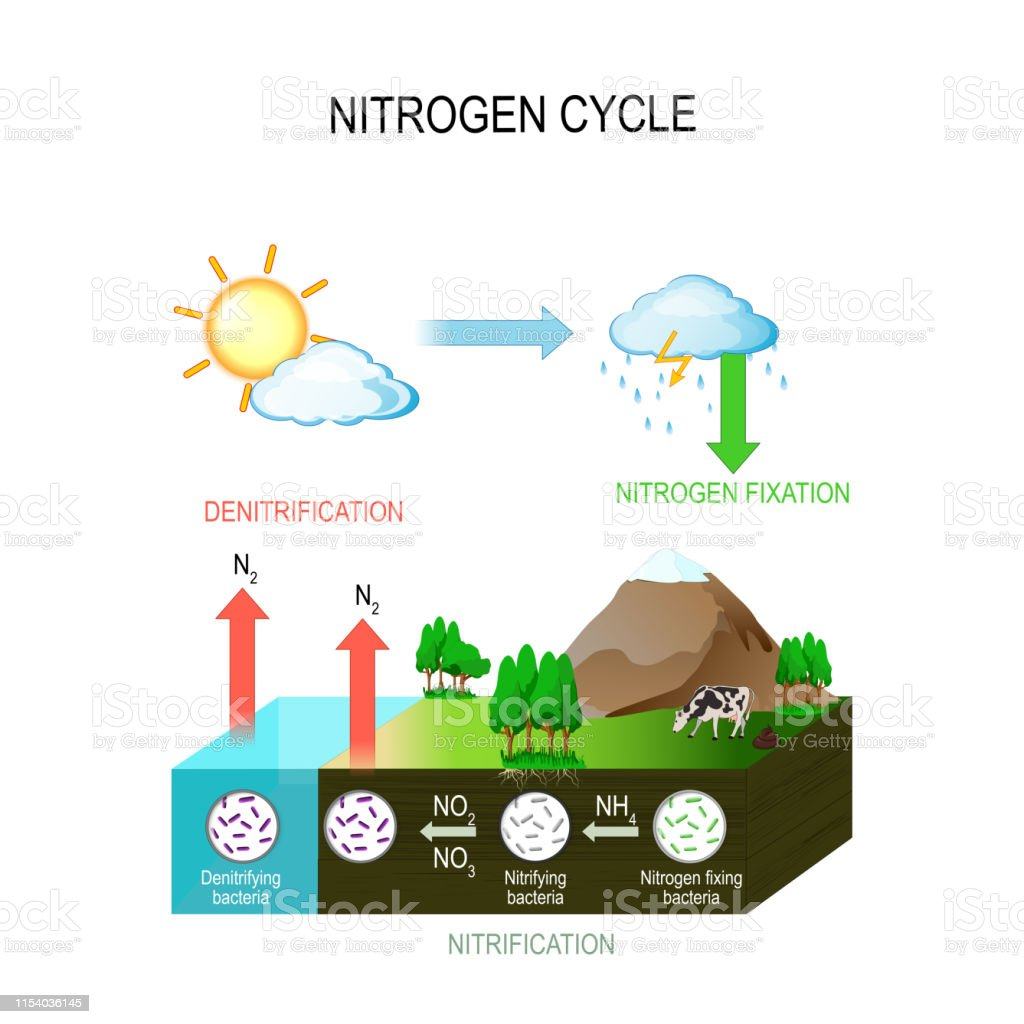 hight resolution of nitrogen cycle royalty free nitrogen cycle stock vector art amp more images of