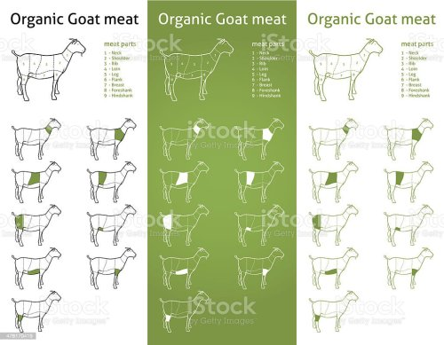 small resolution of organic goat meat cuts diagram set illustration