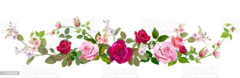 border flower vector flowers horizontal spring roses bouquet borders clip pink rose watercolor mauve background clipart illustrations blossom illustration graphics