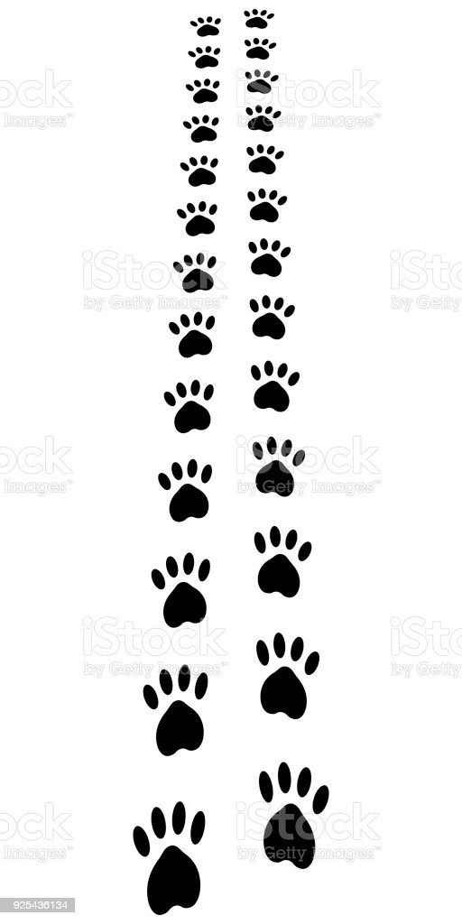 Paw Trail Paw Prints Animal Cat Dog Footprints Vector Away