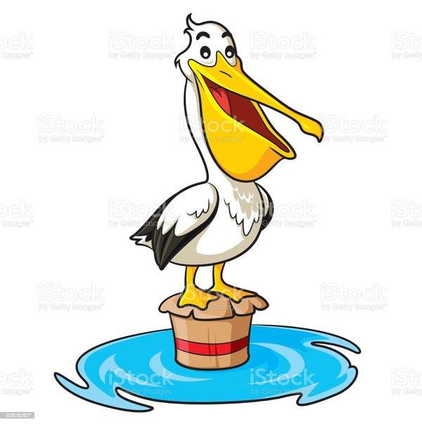 Pelican Cartoon Stock Vector Art & Of Aiming