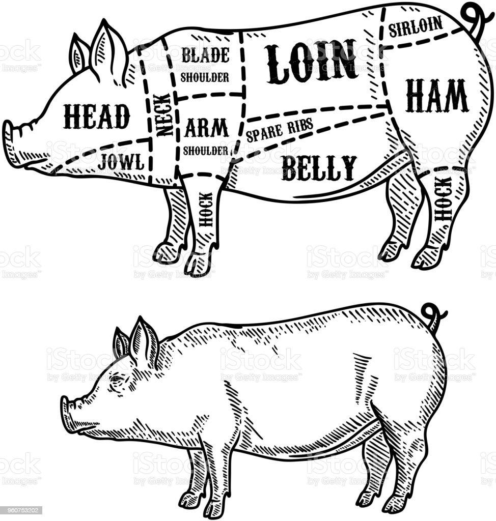hight resolution of pig butcher diagram pork cuts design element for poster card emblem