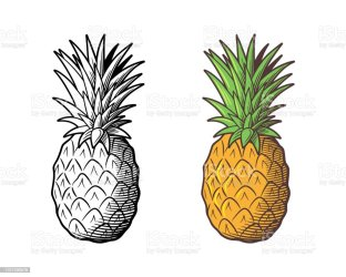 Pineapple Drawing Outline And Colored Version Stock Illustration Download Image Now iStock