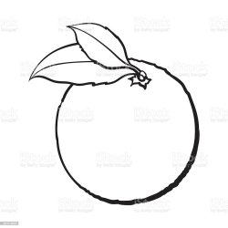 orange realistic drawn hand drawing sketch leaves unpeeled ripe vector colorful fruit clip cut pic agriculture whole isolated fresh citrus