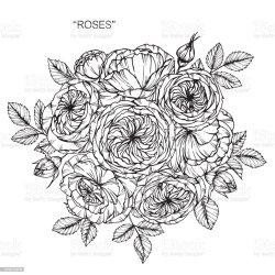 clip border roses floral illustrations vector rose flower line drawing illustration graphics royalty results