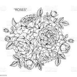 clip border roses vector rose flower floral illustrations drawing line illustration newest results